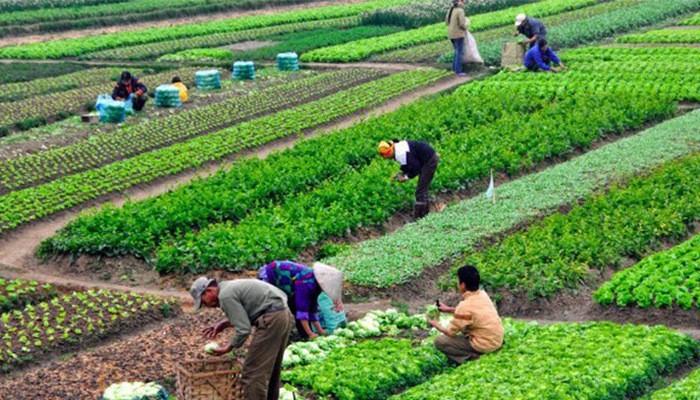 Nông nghiệp hữu cơ - gốc rễ của An toàn thực phẩm, xu hướng của Nông nghiệp thông minh - ảnh 2