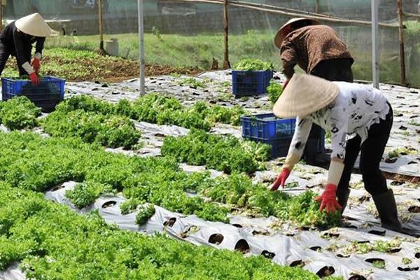 Nông nghiệp hữu cơ - gốc rễ của An toàn thực phẩm, xu hướng của Nông nghiệp thông minh - ảnh 3