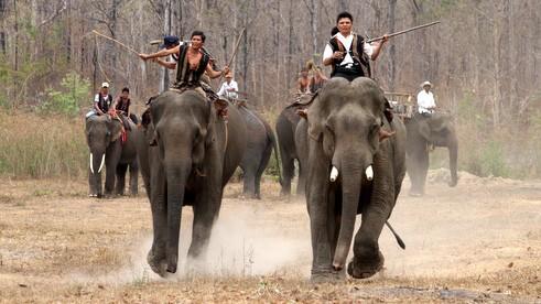 Приручение слонов – традиционный промысел народности М'Нонг - ảnh 3