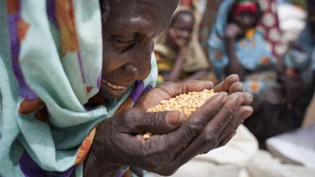 Мировое сообщество призвало активизировать сотрудничество в сфере продовольственной безопасности  - ảnh 1