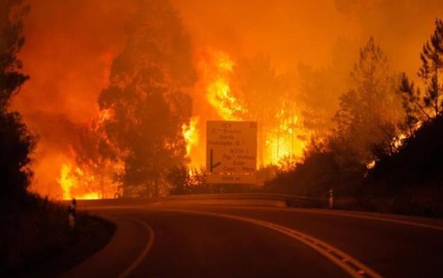 Президент СРВ направил португальскому коллеге телеграмму с соболезнованиями в связи с лесным пожаром - ảnh 1