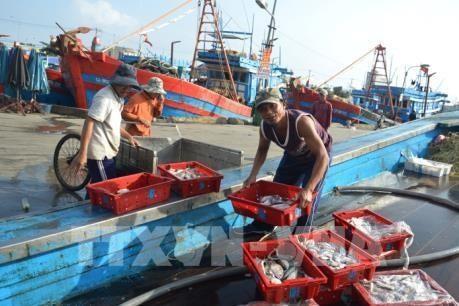 Вьетнам прилагает большие усилия для реализации рекомендаций Еврокомиссии по рыбодобыче - ảnh 1