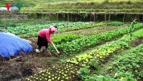 Хоанг Тхи Кан успешно ведёт семейное хозяйство несмотря на многочисленные трудности  - ảnh 1
