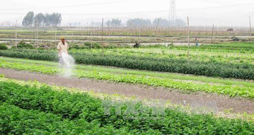 越南农业将从TPP受益  - ảnh 1
