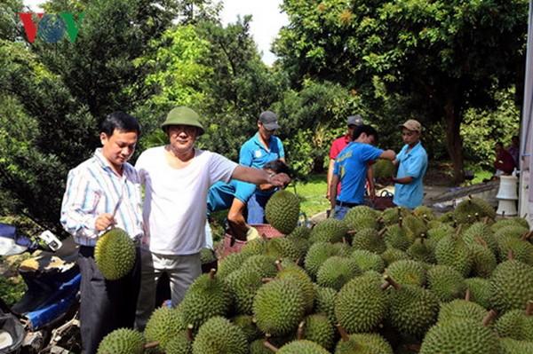 发展私营经济,越南经济的迫切要求 - ảnh 2