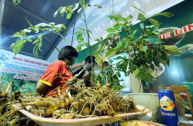 玉灵人参交易市场首次在广南省举行 - ảnh 1