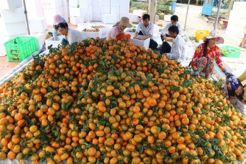 越南致力于促进生产和国内市场开发 - ảnh 1