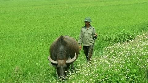 Thái Bình: miền quê mộc mạc, yên bình - ảnh 1