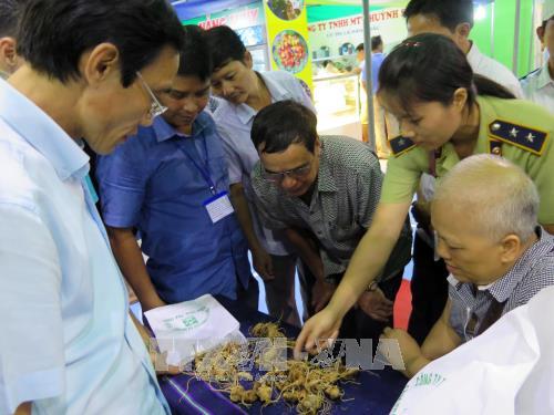 Khai mạc Phiên chợ Sâm Ngọc Linh lần đầu tiên tại tỉnh Quảng Nam - ảnh 2