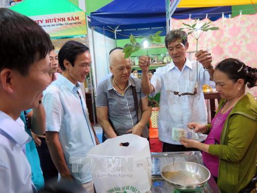 Khai mạc Phiên chợ Sâm Ngọc Linh lần đầu tiên tại tỉnh Quảng Nam - ảnh 1