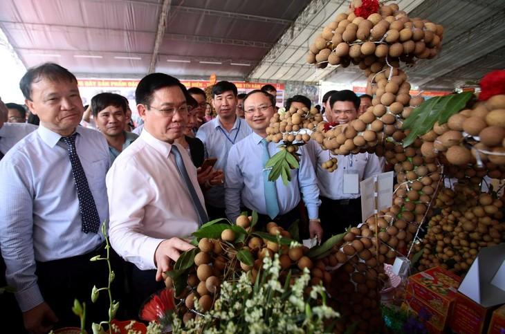 Phó Thủ tướng Vương Đình Huệ dự hội nghị xúc tiến Nhãn lồng Hưng Yên - ảnh 1