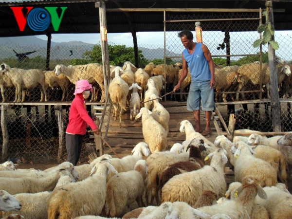 Развитие животноводства в соответствии с социально-экономическим развитием страны - ảnh 1