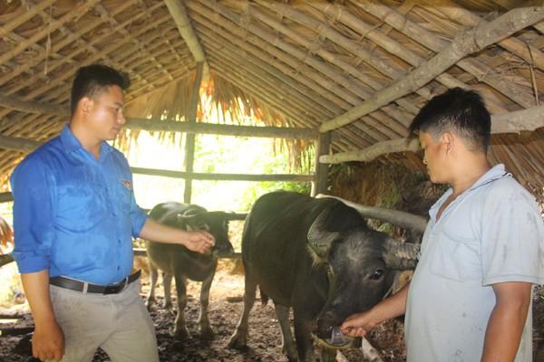 Уезд Куангбинь провинции Хазянг эффективно использует льготные кредиты для развития сельского хозяйства - ảnh 2