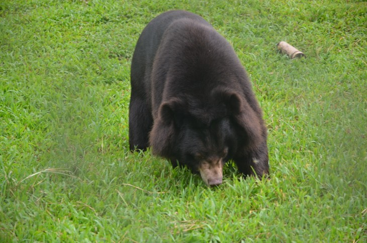Activities held to save bear population - ảnh 1