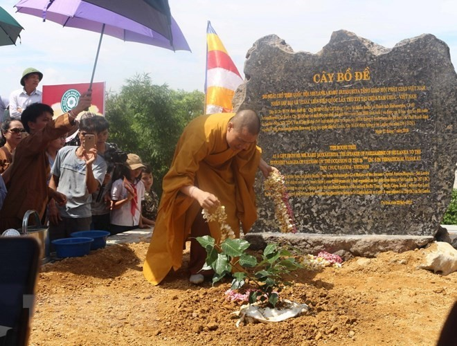 Sri Lanka's Bodhi tree planted at Tam Chuc Pagoda - ảnh 1