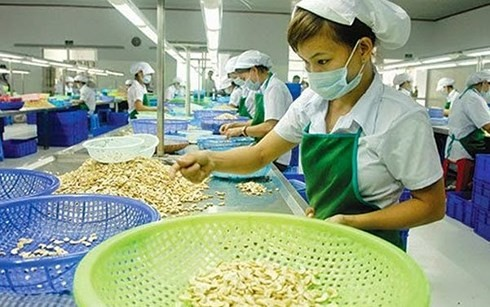 Vietnam targets 3.7 billion USD in cashew nut export - ảnh 1