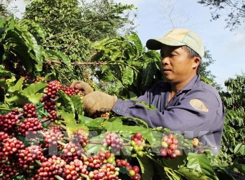 Free coffee for visitors at Buon Ma Thuot coffee festival - ảnh 1