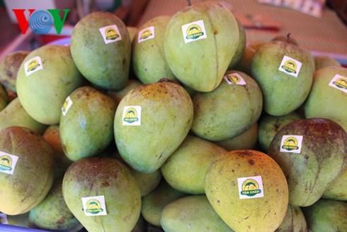 Son La exports more mangoes to UK - ảnh 1