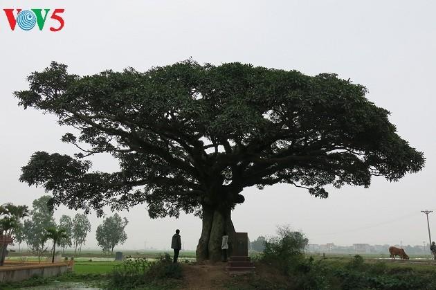 Aldea de Binh Da, huellas de la herencia  - ảnh 3