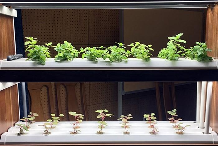 Promueven aplicaciones de alta tecnología en la producción agrícola vietnamita - ảnh 1