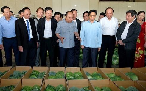 Eliminan dificultades para el desarrollo de la agricultura vietnamita - ảnh 1