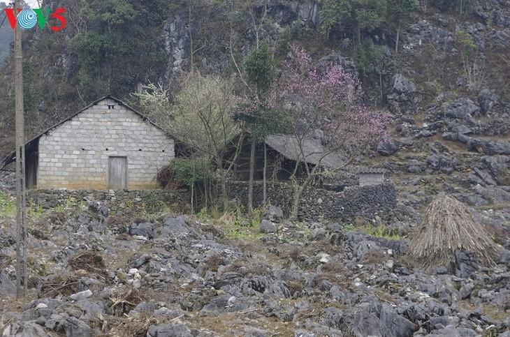 Los Mong y sus viviendas típicas de tierra - ảnh 2