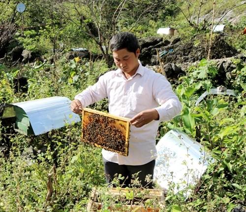Modelos de horticultura y apicultura ayudan a los agricultores de Ha Giang a aliviar la pobreza  - ảnh 1