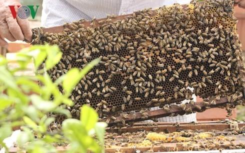 Ho Van Sam, un apicultor apasionado en Son La - ảnh 2