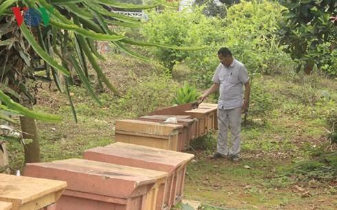 Ho Van Sam, un apicultor apasionado en Son La - ảnh 1