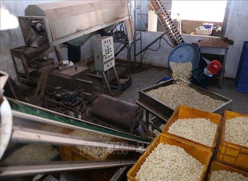 Vietnam invierte en procesamiento de productos agrícolas - ảnh 1