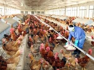 สหรัฐให้การช่วยเหลือเวียดนามเพิ่มความสามารถในการป้องกันโรคไข้หวัดนก - ảnh 1