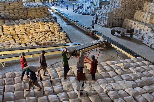 การส่งออกสินค้าเกษตรเวียดนามในกระบวนการผสมผสานทีพีพีและเออีซี - ảnh 1