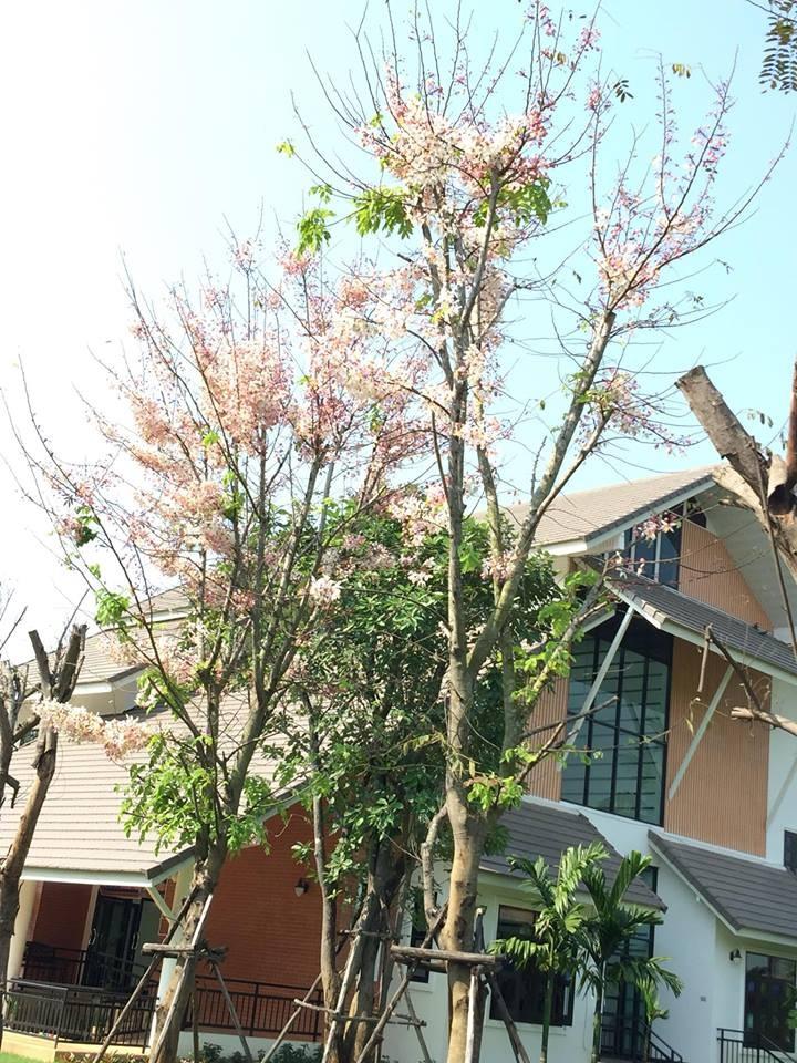 ผู้ที่มีส่วนร่วมเชื่อมสายสัมพันธ์มิตรภาพไทย-เวียดนาม - ảnh 3