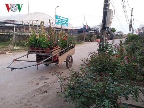 มหาเศรษฐีรุ่นใหม่ในหมู่บ้านปลูกดอกไม้ ซวนกวาน - ảnh 2