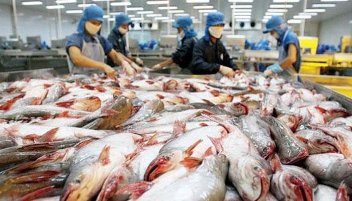 การส่งออกปลาสวายสร้างสถิติใหม่ - ảnh 1