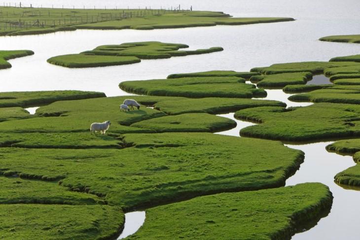 หมู่กางจ๋าย ได้รับการโหวตให้เป็นสถานที่ท่องเที่ยวที่หลากหลายสีสันที่สุดในโลก - ảnh 4