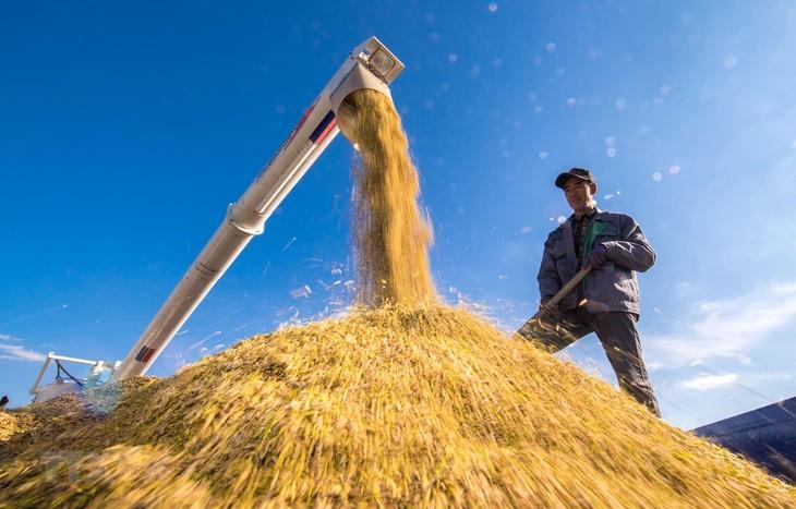 จี 20 ให้ความสนใจเป็นอันดับต้นๆต่อการประยุกต์ใช้ปัญญาประดิษฐ์และหุ่นยนต์ในหน่วยงานการเกษตร - ảnh 1