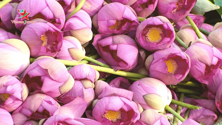 มาเยือนเวียดนามชมดอกบัวบานสะพรั่งในฤดูร้อน - ảnh 6