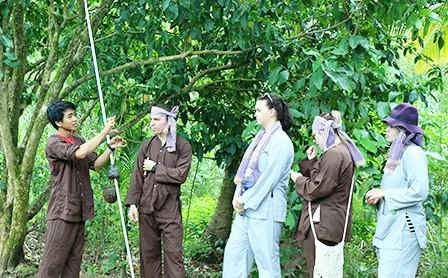 Vàm Xáng fruit garden in Cần Thơ - ảnh 2