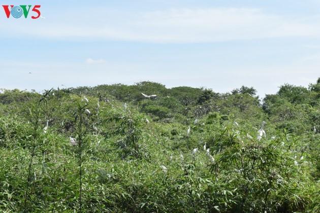 Bằng Lăng stork garden in Cần Thơ province - ảnh 1