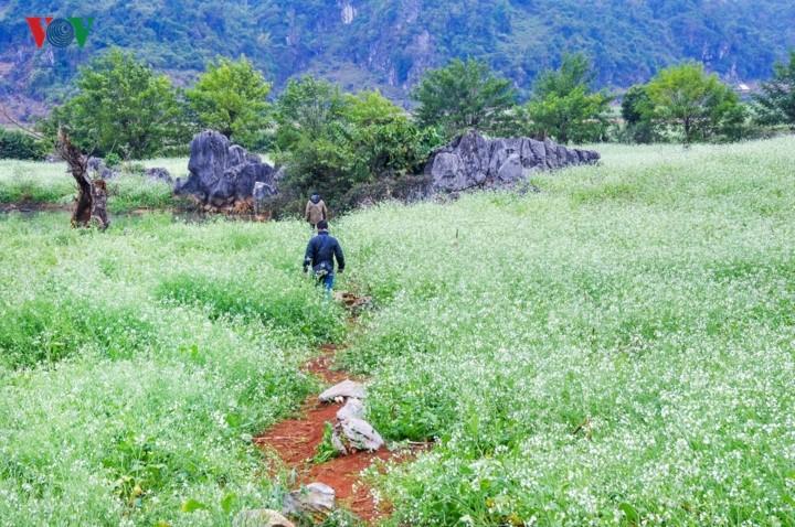 A visit to Ang village and Doi cave in Moc Chau, Son La - ảnh 1