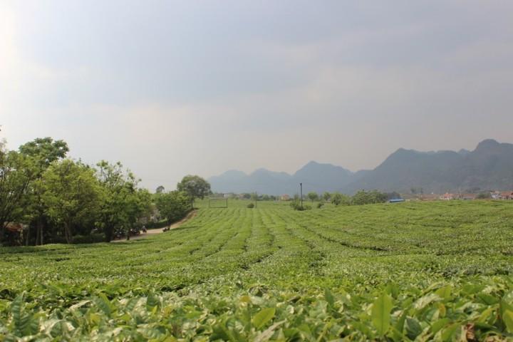 A visit to Ang village and Doi cave in Moc Chau, Son La - ảnh 2