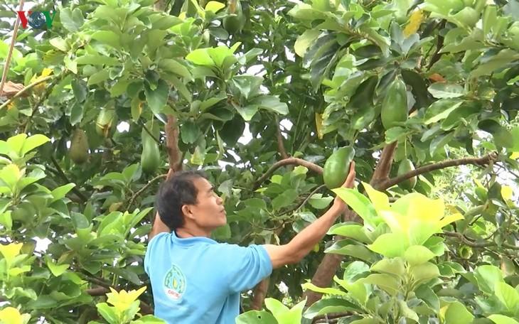 Vietnam to export avocados to US - ảnh 1