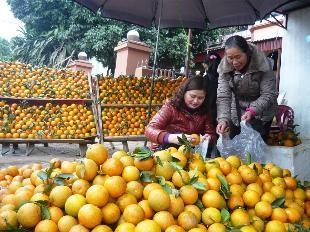 Das Dorf Cao Phong baut Markenzeichen für ihre Orangen auf - ảnh 1