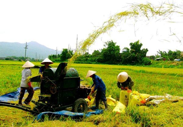 Aufklärung zur Neugestaltung ländlicher Gebiete - ảnh 1