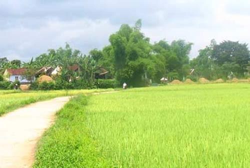 Einigkeiten in Neugestaltung ländlicher Gebiete in Binh Dinh - ảnh 1