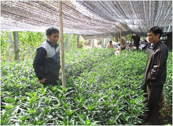 Die Gemeinde Da Ron wendet die Hochtechnologie in Landwirtschaft an - ảnh 1