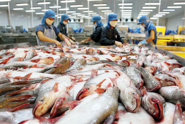 Aufhebung der Kontrolle für vietnamesischen Pangasius ist eine richtige Entscheidung der USA - ảnh 1