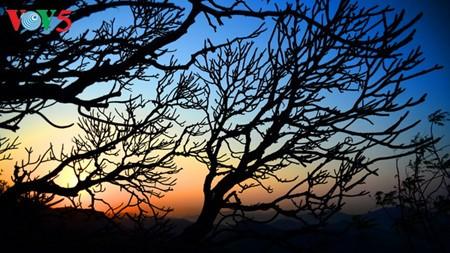 Yen Tu – Morgendämmerung an einem bedeutenden Ort des Buddhismus - ảnh 17