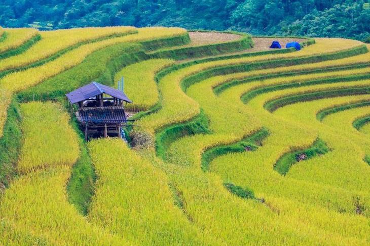 Reisterrassenfelder in Hoang Su Phi, Meisterwerk der ethnischen Minderheiten - ảnh 1